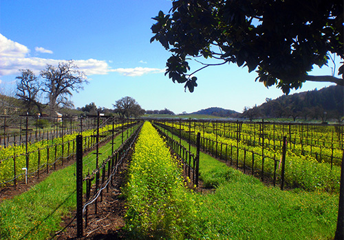 Vineyard - Wine Lover's Tour in San Francisco, California