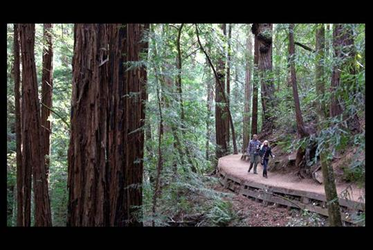 Muir Woods & Sausalito Half Day Tour with Incredible Adventures in San Francisco, CA
