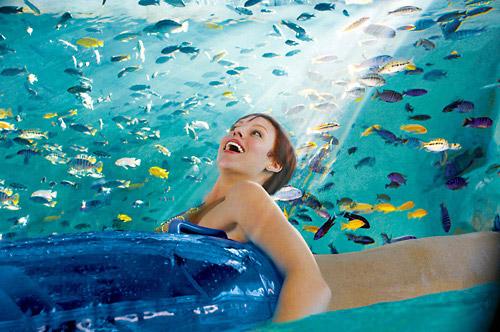 Aquatica Orlando Tickets Seaworld S Water Park Orlando Fl