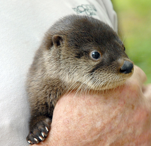 ... Otter Pup  Brookgreen Gardens In Murrells Inlet, South Carolina ...