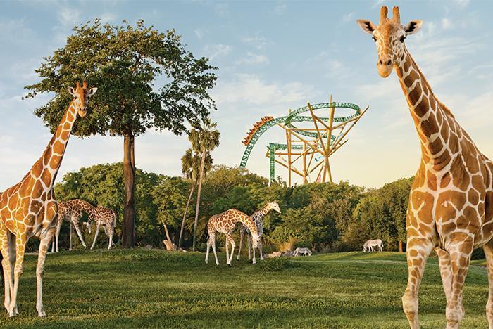 Image Result For Busch Gardens Tamp Fl Tickets