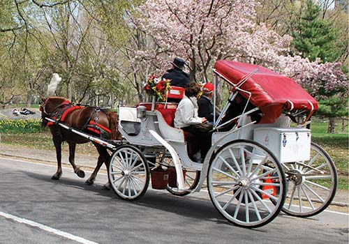 central park horse and carriage tour new york ny. Black Bedroom Furniture Sets. Home Design Ideas