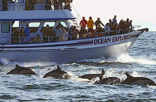 Whale Watching Newport Beach Ca