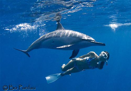 Morning Wild Dolphin Swim Amp Kealakekua Bay Snorkel Kona