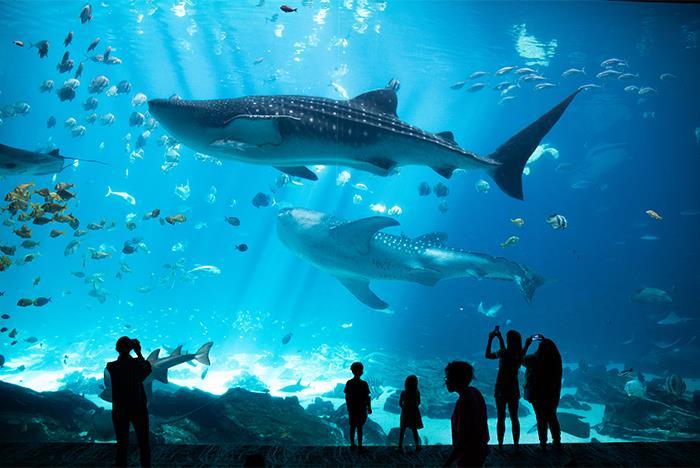 Georgia Aquarium Tickets - Atlanta, GA | Tripster