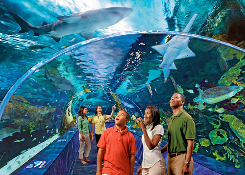 Save $2 Per Ticket - Ripley's Aquarium Bargain Prices
