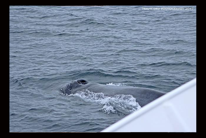 San Diego Whale Amp Dolphin Watching Tours Hornblower Cruises