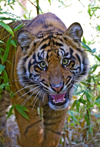 Safari In Ga >> San Diego Zoo Safari Park Tickets - Escondido, CA | Tripster