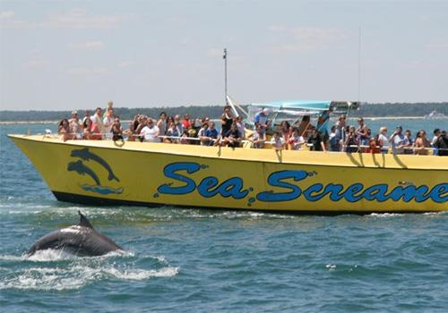 Sea Screamer Myrtle Beach Dolphin Cruises In Little River South Carolina
