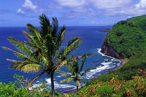 Temptation Tours Maui Road To Hana