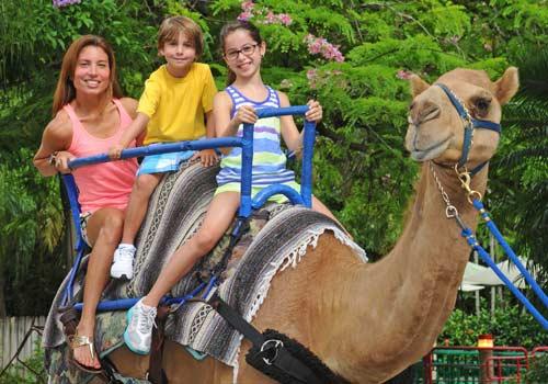 Zoo Miami Miami Fl