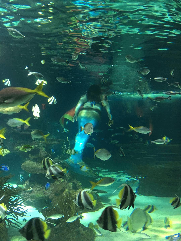 Ripley's Aquarium of the Smokies | Gatlinburg Aquarium Tickets