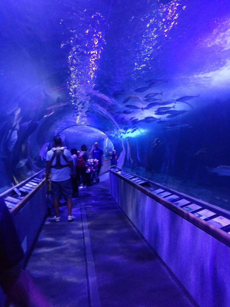 Aquarium Of The Bay Tickets San Francisco Ca