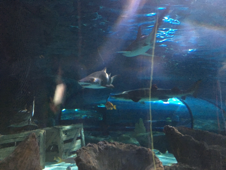 Ripley S Aquarium Myrtle Beach Myrtle Beach Aquarium