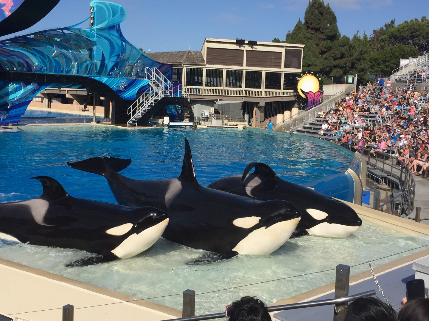 Seaworld san diego coupons and discounts