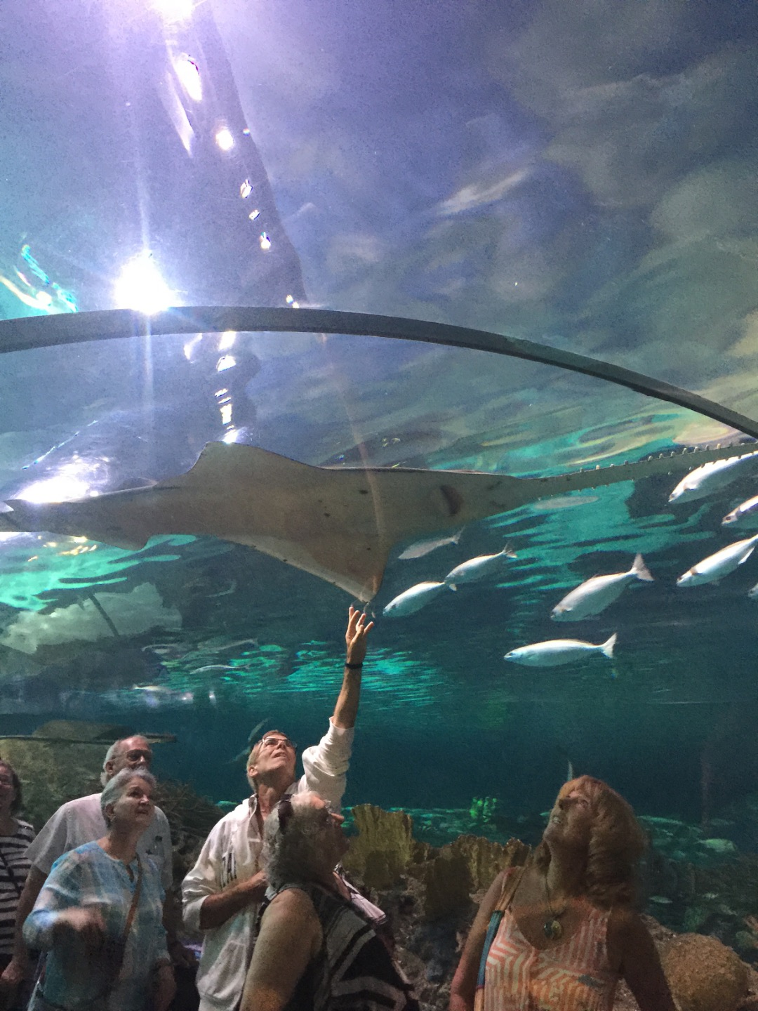 Ripley's Aquarium of the Smokies | Gatlinburg Aquarium