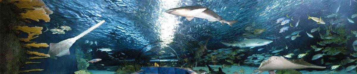 Ripley's Aquarium Vacation Packages - Pigeon Forge, TN